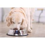 Happy pet voerbak antislip (11 CM)