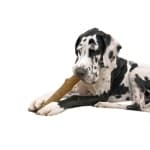 Petstages durable stick (LARGE 20 CM)
