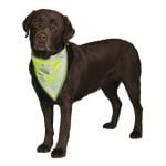 Trixie reflecterende bandana geel (L-XL 43-60 CM)
