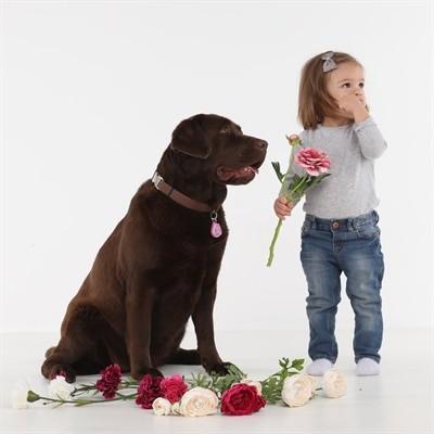 Tickless teek en vlo afweer voor hond en kat roze