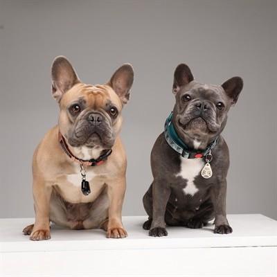 Tickless teek en vlo afweer voor hond en kat beige