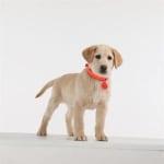 Tickless teek en vlo afweer voor hond en kat fluoriserend oranje