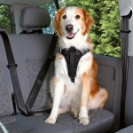 Trixie hondentuig auto dog protect zwart (80-100X2,5 CM)
