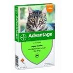 Bayer advantage kat 4 pipetten (40 TOT 4 KG 4 PIP)