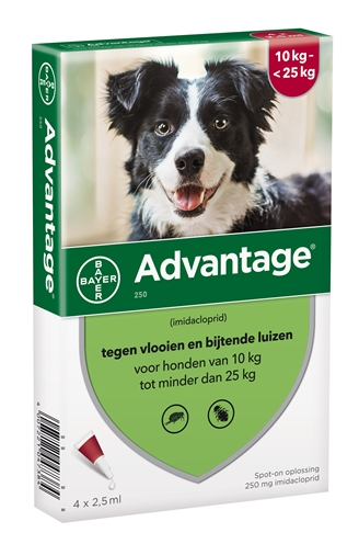Bayer advantage hond 4 pipetten (250 10-25 KG 4 PIP)