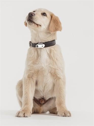 Tickless teek en vlo afweer voor kleine hond wit
