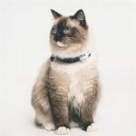 Tickless teek en vlo afweer voor kat wit