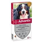 Bayer advantix spot on (600/3000 40+ KG – 4 PIP)