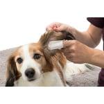 Trixie ear care vingerpads (50 ST)