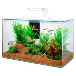Zolux aquarium clear kit wit (32 LTR 50X25X38 CM)