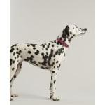 Joules halsband hond leer roze (56-66X3,8 CM)