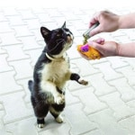 Kong refillables catnip kattenkruid buisjes (3 ST)