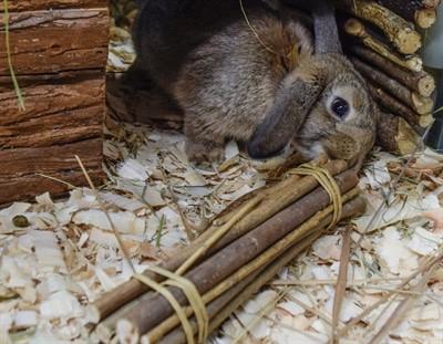 Happy pet willow sticks (26X5X5 CM)