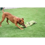 Happy pet king size tug flostouw (L 101X18 CM)