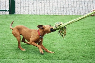 Happy pet king size tug flostouw (L 101X18 CM)