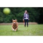 Happy pet fling n fetch werpstok assorti (61X7X7 CM)