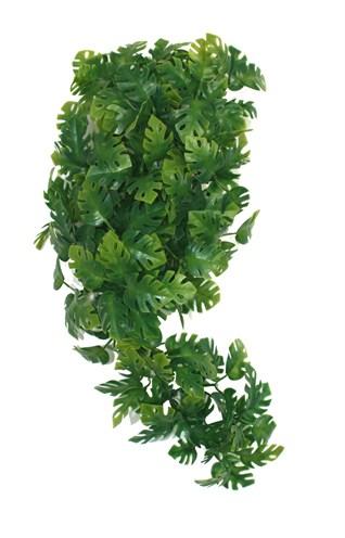 Komodo plant split philodendron (30 CM)