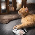 Canadian cat speelkussen zigzag met catnip zwart / wit (10X7,5X1 CM)