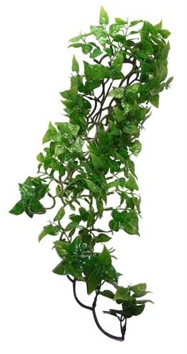 Komodo philodendron plant (60 CM)