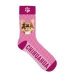 Sokken chihuahua (36-41)