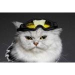Croci skibril hond horizon geel / zwart glas