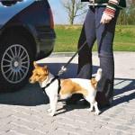 Trixie hondentuig auto inclusief gordel zwart (30-60X2 CM)