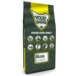 Yourdog engelse bulldog pup (12 KG)