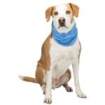 Trixie koel bandana pva blauw (XL)